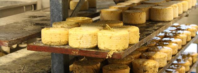 FKK_Naturmælk_ost-artikel